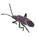 _0000_box-elder-bugs