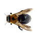 _0005_carpenter bee
