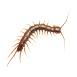 _0008_centipede