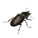 _0013_beetle