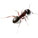 _0016_header-ant