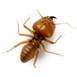 _0019__0005_termite-isolatd