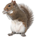 _0021__0003_Squirrel