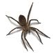 _0022__0002_usp-spider