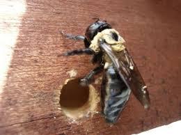 c bee